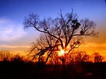 Der Baum auf Sonnenunterganghintergrund Stockfotografie