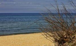 Der Baum dehnt auch zum Meer aus stockbild