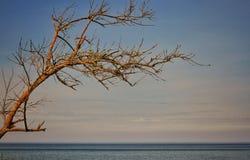 Der Baum dehnt auch zum Meer aus lizenzfreie stockfotografie