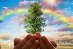Der Baum in den Händen der Kinder auf einem Hintergrund des bewölkten Himmels und des Regenbogens, Ökologiekonzept Lizenzfreie Stockfotos