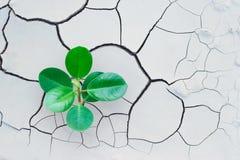 Der Baum, der auf gebrochener Erde wächst, retten die Welt Lizenzfreies Stockfoto