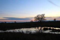 Der Baum, der im kleinen See bei Sonnenuntergang sich reflektiert Stockbilder