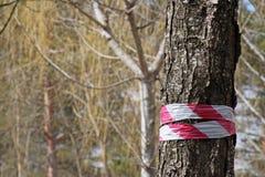 Der Baum, der mit markiert wird, unterzeichnen herein den Wald stockbild