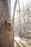 Der Baum des Falles Lizenzfreies Stockfoto