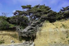 Der Baum des Lebens lizenzfreies stockbild