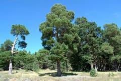 Der Baum des Lebens vorher und nachher stockfotografie