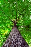 Der Baum des Todes. Lizenzfreie Stockfotos
