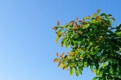 Der Baum des Waldes und der blaue Himmel Stockbild