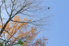 Der Baum des Waldes und der blaue Himmel im Frühjahr lizenzfreies stockbild