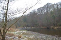 Der Baum durch den Fluss Stockfotografie