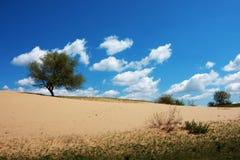 Der Baum in einer Wüste Lizenzfreies Stockfoto