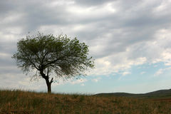 Der Baum in einer Wiese Stockfoto