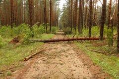 Der Baum fiel weg von der Straße Lizenzfreies Stockfoto