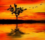 Der Baum gegen den Sonnenuntergang Lizenzfreies Stockbild