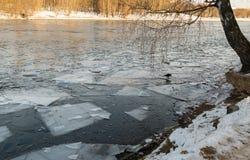 Der Baum gelehnt auf dem Teich im November Lizenzfreie Stockfotografie