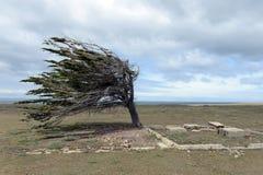 Der Baum im Archipel von Tierra del Fuego Lizenzfreie Stockfotografie