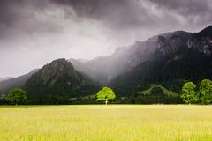 Der Baum im Bayern, Deutschland It& x27; s gelegen nahe Neuschwanstein- und Hoshenschwangau-Schlössern Stockfotos