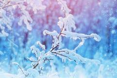 Der Baum im Schnee Lizenzfreies Stockbild