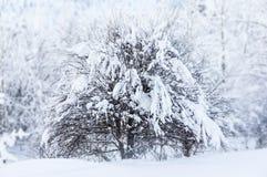 Der Baum im Schnee Stockfotografie