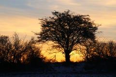 Der Baum im Sonnenaufgang Stockfotografie