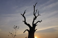 Der Baum im Sonnenuntergang Lizenzfreies Stockbild