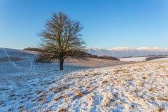 Der Baum im Winter Lizenzfreies Stockfoto