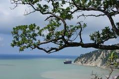 Der Baum ist über dem Meer hoch. Stockbild