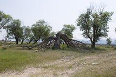 Der Baum ist durch einen Blitz defekt Lizenzfreie Stockfotografie