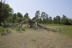 Der Baum ist durch einen Blitz defekt Stockfotos