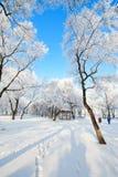 Der Baum mit Raureif auf Schnee in der Winterlandschaft Stockfoto