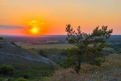 Der Baum mit der untergehenden Sonne lizenzfreies stockbild