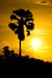 Der Baum nach Sonnenuntergang Stockfoto