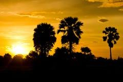 Der Baum nach Sonnenuntergang Stockfotografie