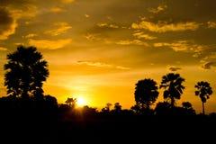 Der Baum nach Sonnenuntergang Lizenzfreie Stockbilder