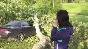 Der Baum, nachdem der Hurrikan auf das Auto fiel, das Mädchen ruft die Retter an stock video
