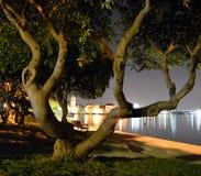 Der Baum nachts in der Stadt des Hintergrundes sogar Stockfoto