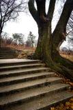 Der Baum nahe bei der Treppe stockfotografie