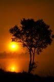 Der Baum nahe dem See auf dem Sonnenaufgang Stockfoto