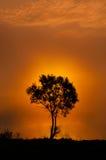 Der Baum nahe dem See auf dem Sonnenaufgang Lizenzfreie Stockfotografie