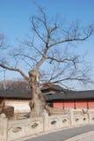 der Baum ohne Blatt Lizenzfreies Stockfoto