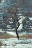 der Baum der Stadt stockbild