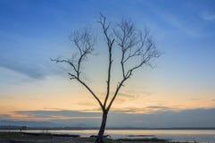Der Baum starb stockfotografie