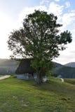 Der Baum und das alte Haus in einer Landschaft Rumänien Stockbilder