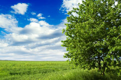 Der Baum und das Feld. Stockbild