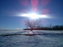 der Baum und die Sonne Lizenzfreies Stockfoto