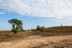 Der Baum und die Straße in der Steppe Stockfotografie