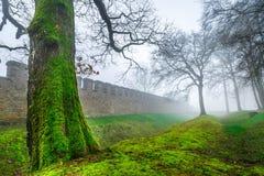 Der Baum und historische alte das Rom-Schloss in nebeligen Misty Day Stockbilder