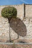 Der Baum und sein Schatten Stockbild