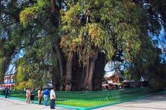 Der Baum von Tule Lizenzfreies Stockfoto