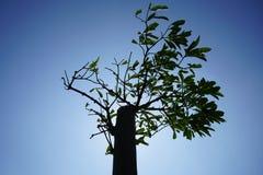 Der Baum vor dem Sonnenlicht Lizenzfreie Stockfotos